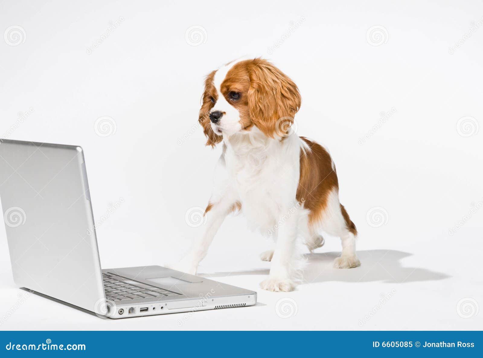 Puppy met laptop computer
