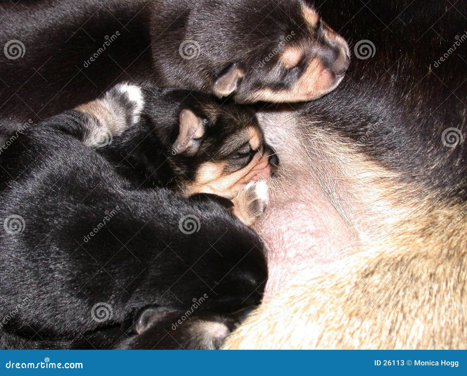 Puppy met Mum