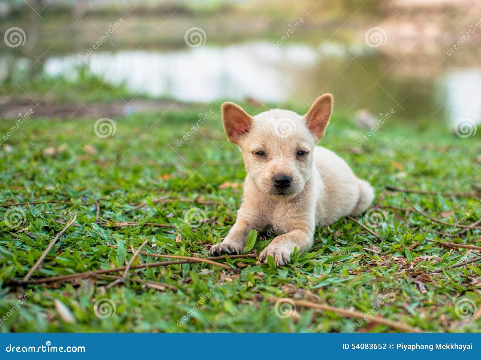 Puppy op grasgebied