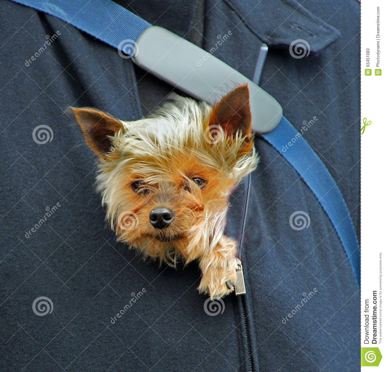Puppy Protection Stock Photo Image 63451083