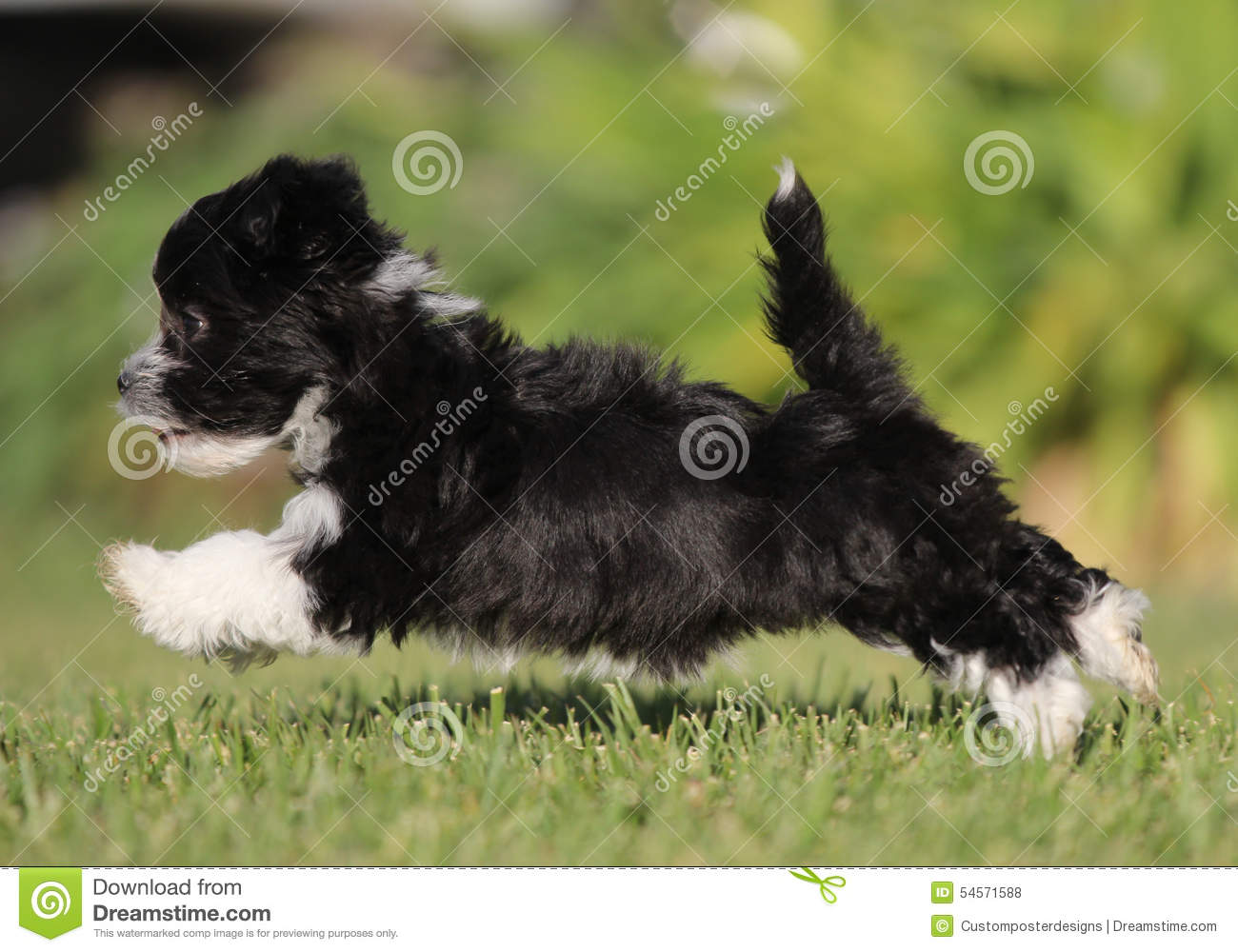 Download A Puppy Running In A Field. Stock Photo - Image of playing, puppy: 54571588