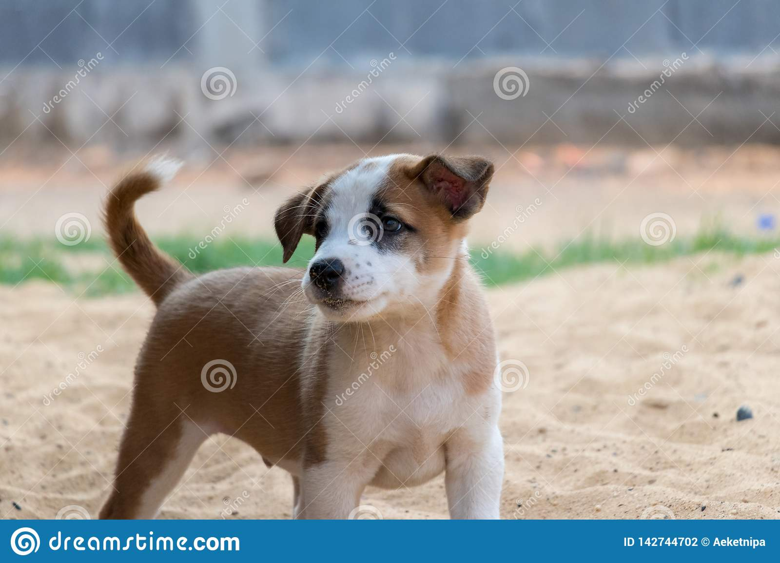 Puppy On The Sand Cute Dog Having Playtime Stock Photo Image Of Puppy Cute 142744702
