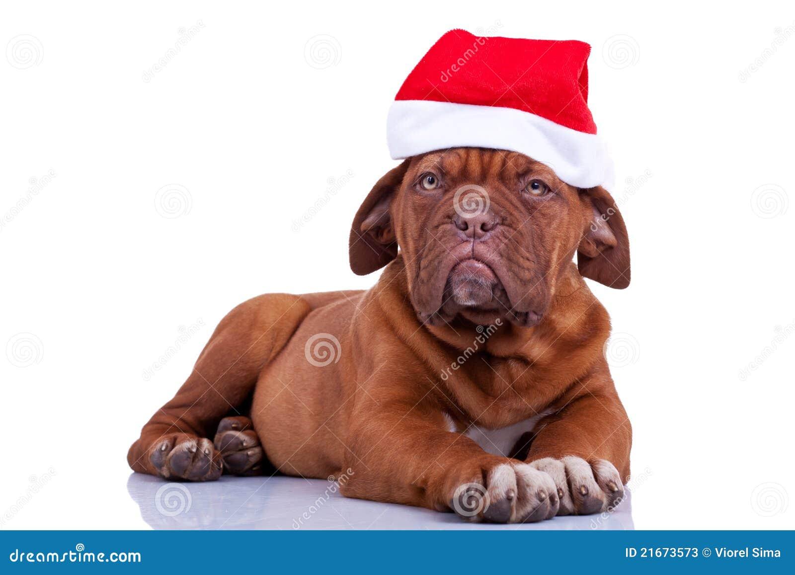 Puppy with a santa cap
