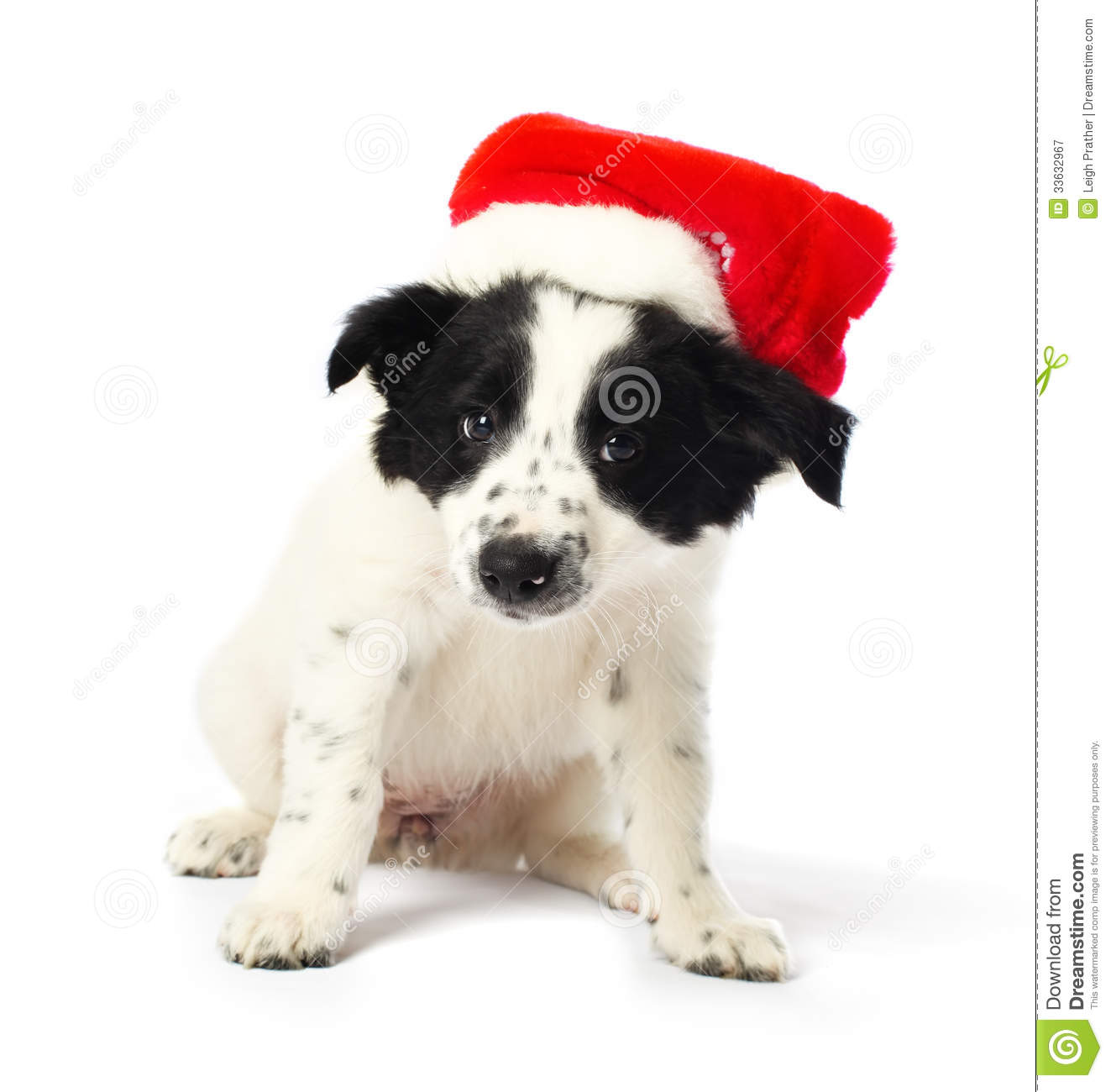 Puppy with santa hat stock image of animal cute