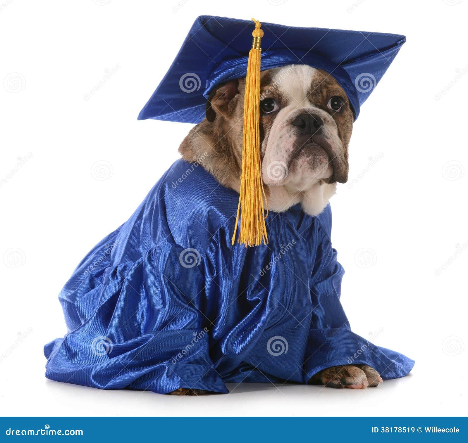 Puppy school