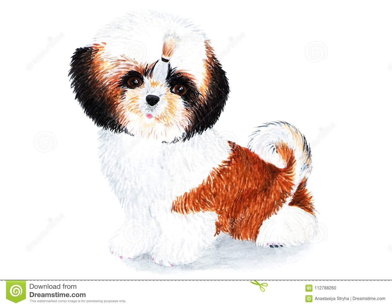 Puppy Shih Tzu With Long Hair Watercolor Illustration Stock