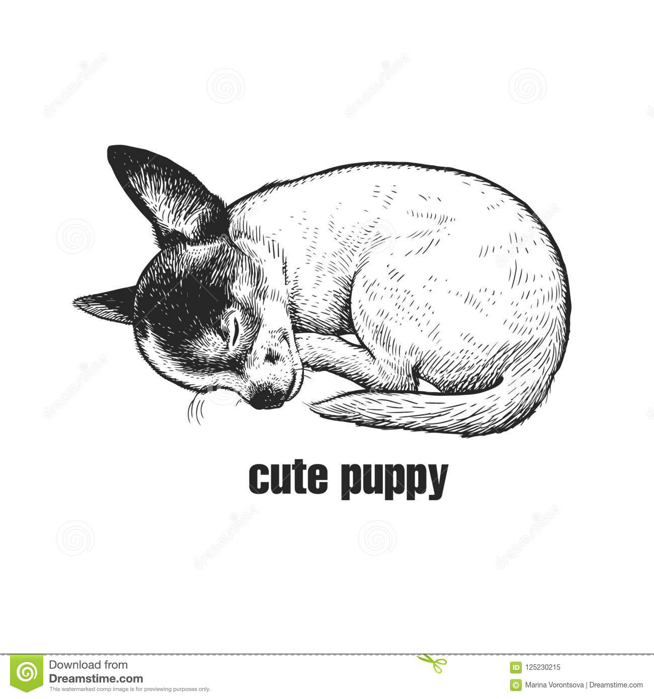 Puppy Is Sleeping Chihuahua Dog Breed Hand Made Black And Whit Stock Vector Illustration Of Drawing Animal 125230215