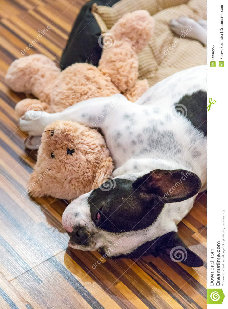 Puppy Sleeping With Teddy Bear Stock Photo - Image: 33362272