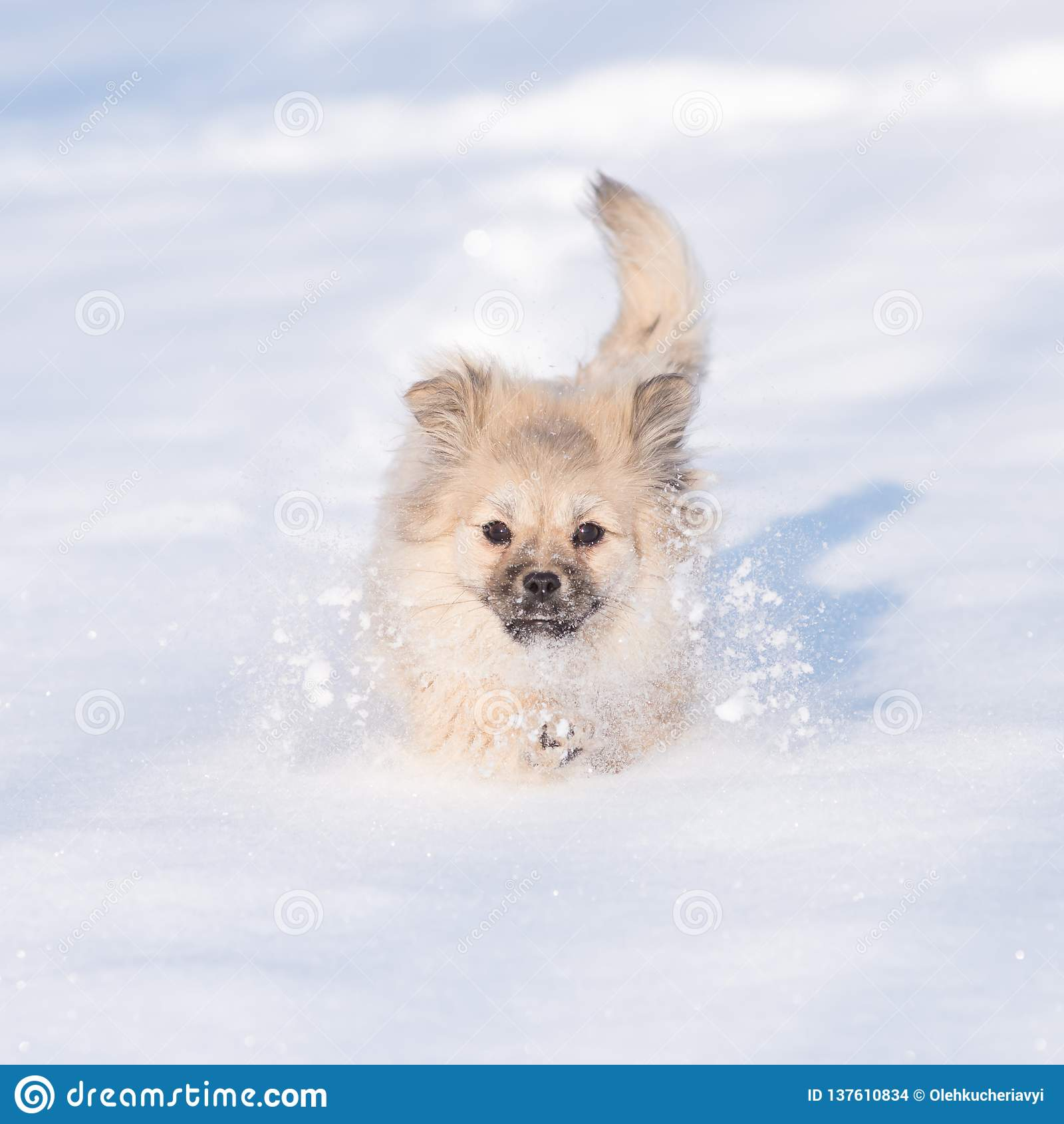 Puppy in the snow in the winter