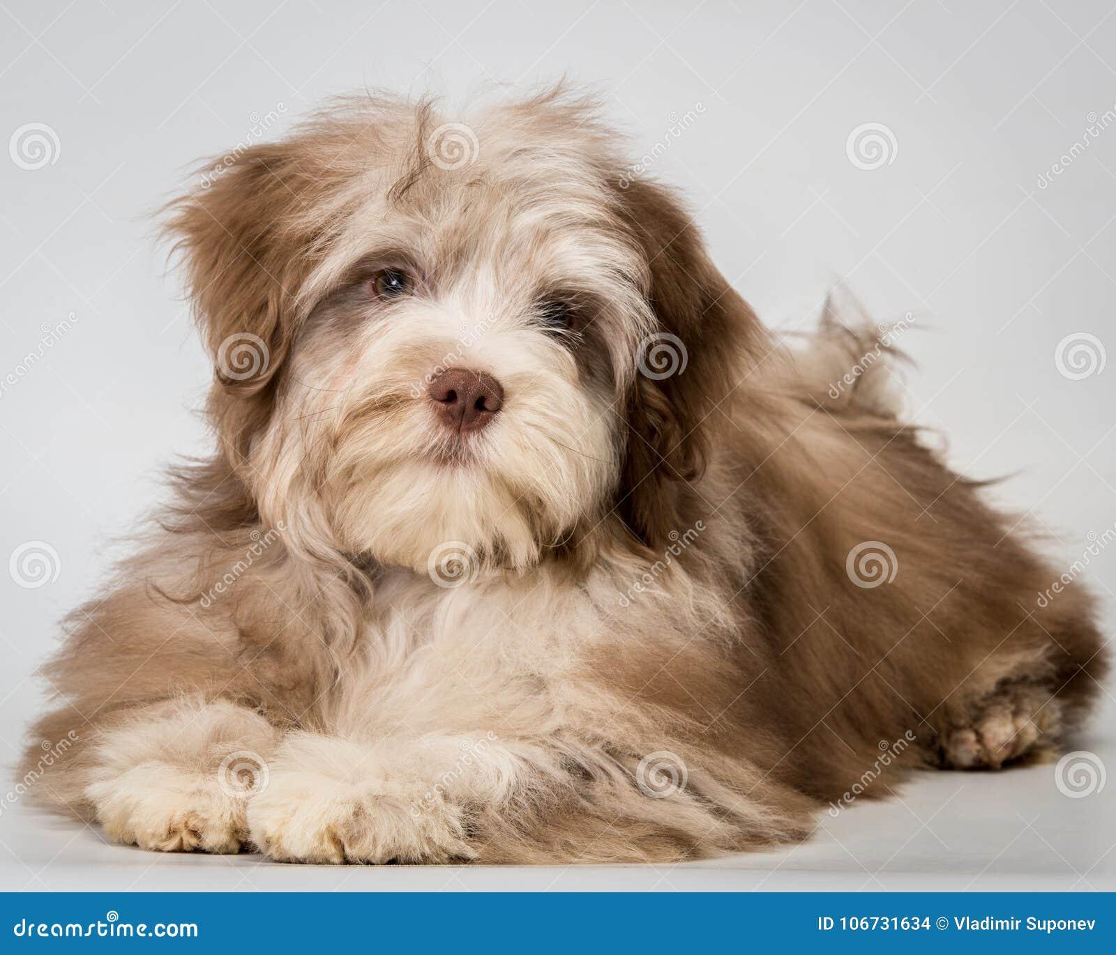 Puppy in studio