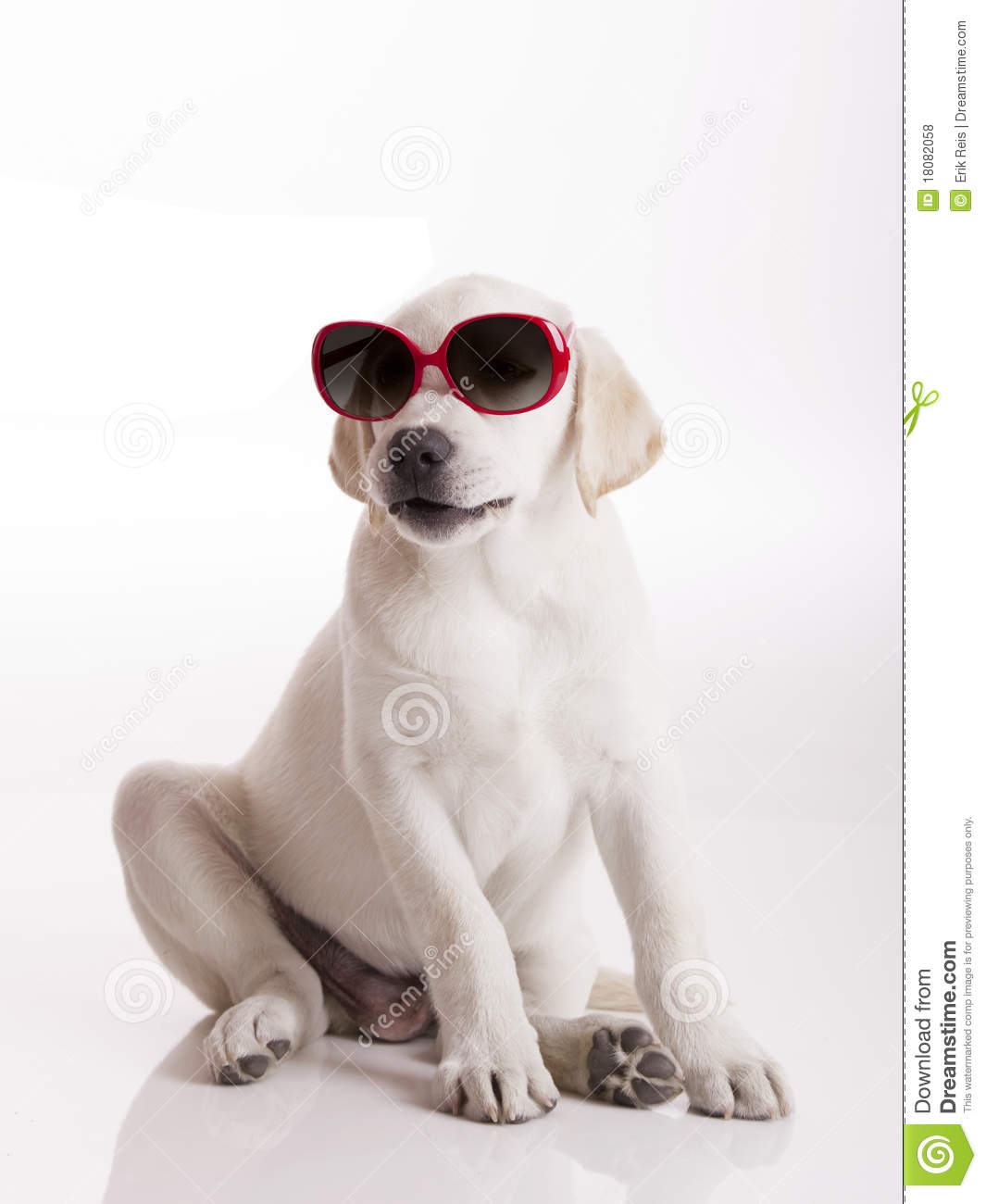 Puppy With Sunglasses Royalty Free Stock Photos - Image: 18082058