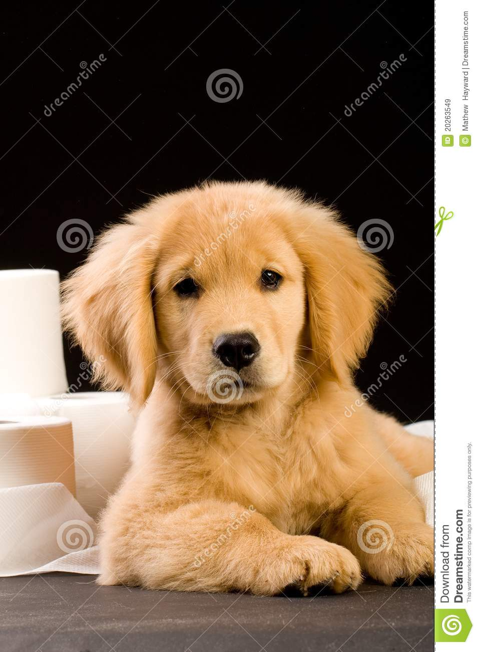 Puppy And Toilet Paper Stock Image Image Of Flush Furry