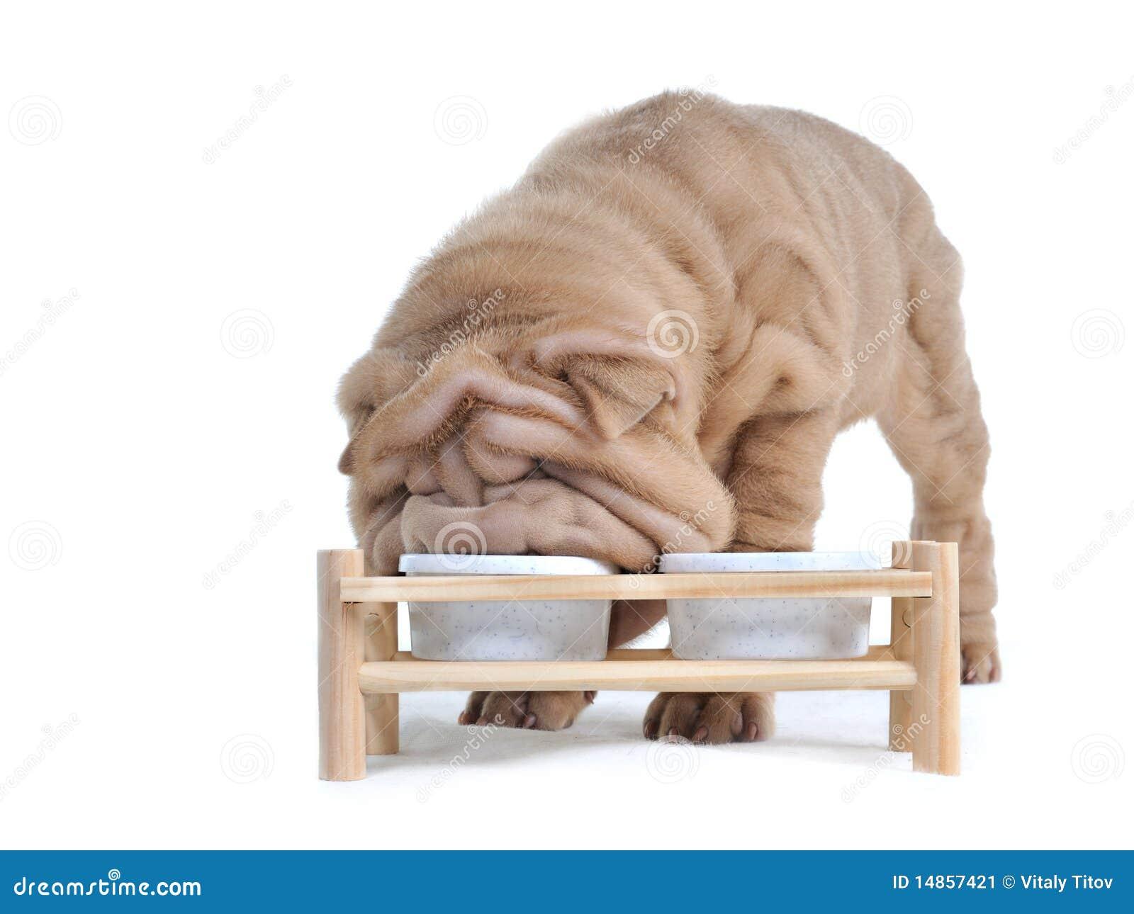 Puppy Treat