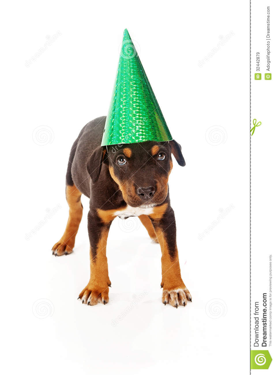 Puppy wearing green party hat
