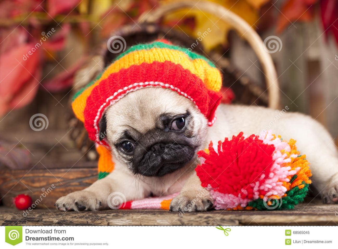 c14f5af449a Puppy Wearing The Knitted Hat Stock Image - Image of cartoon