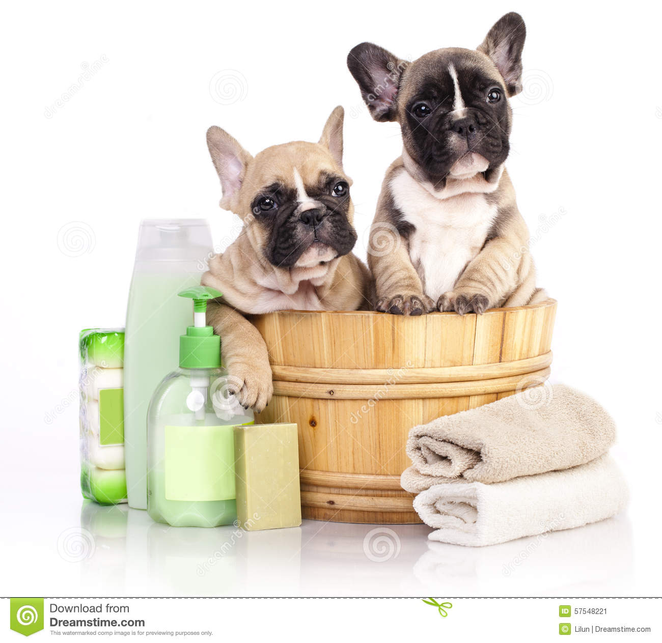 Puppy In Wooden Wash Basin Stock Photo Image 57548221