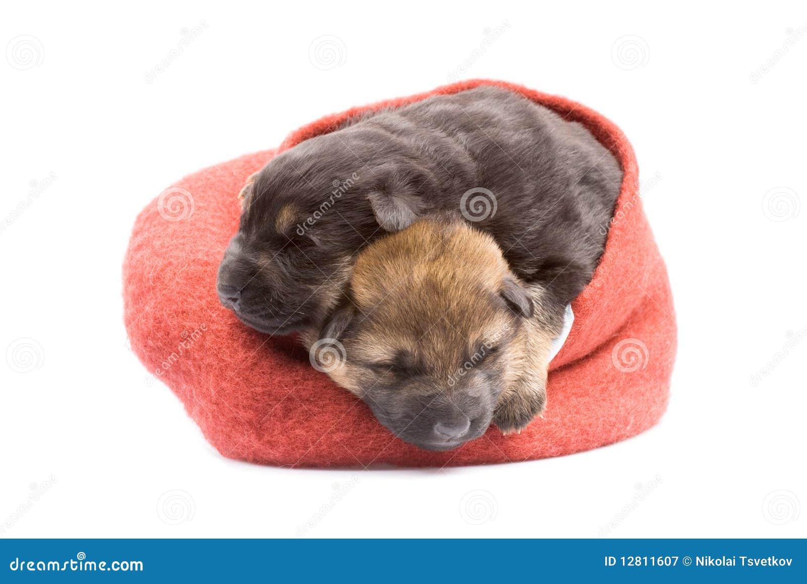Puppys recém-nascidos