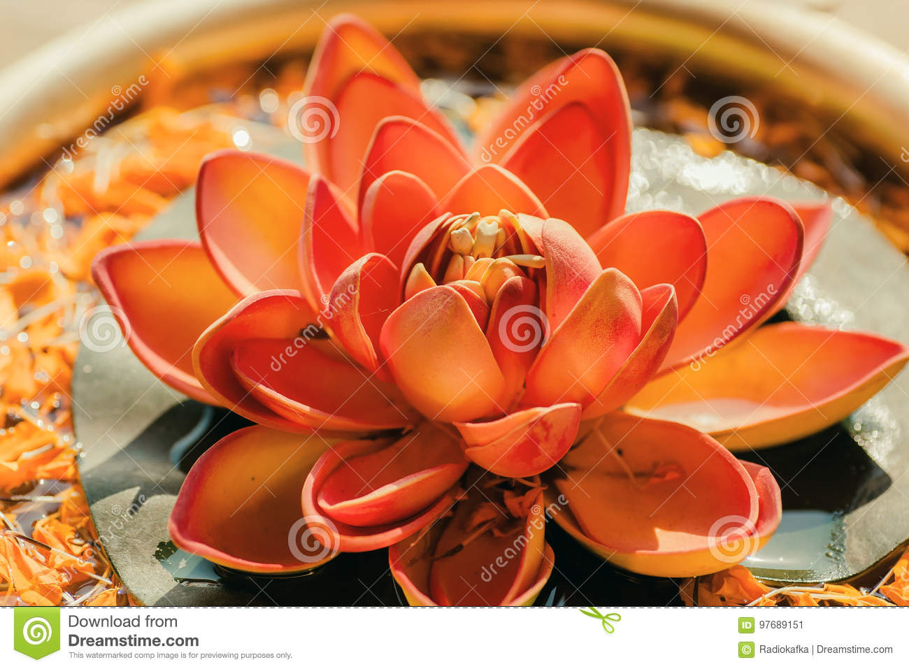 Pure Nelumbo Flower Known As Lotus In A Copper Vase Sacred Plant In