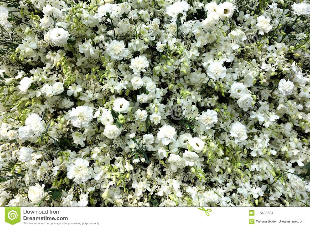 Pure White Array Of Flowers Background Stock Photo Image Of White