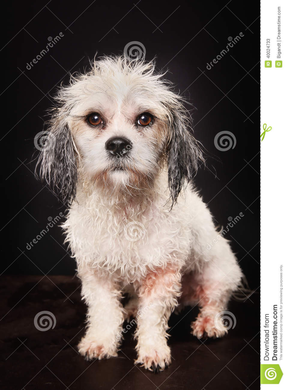Unlimited Dog Grooming