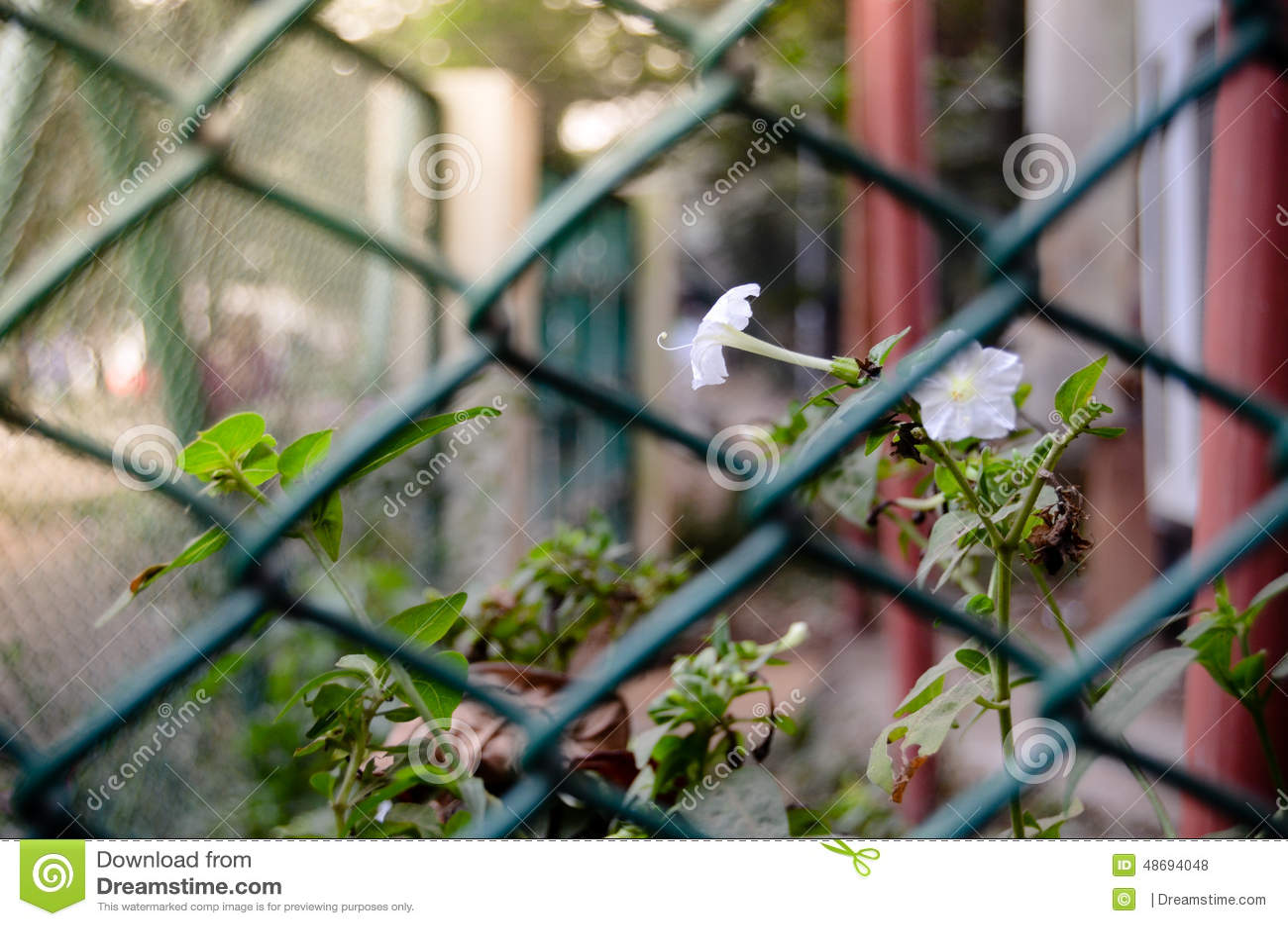 Pureza en jaula