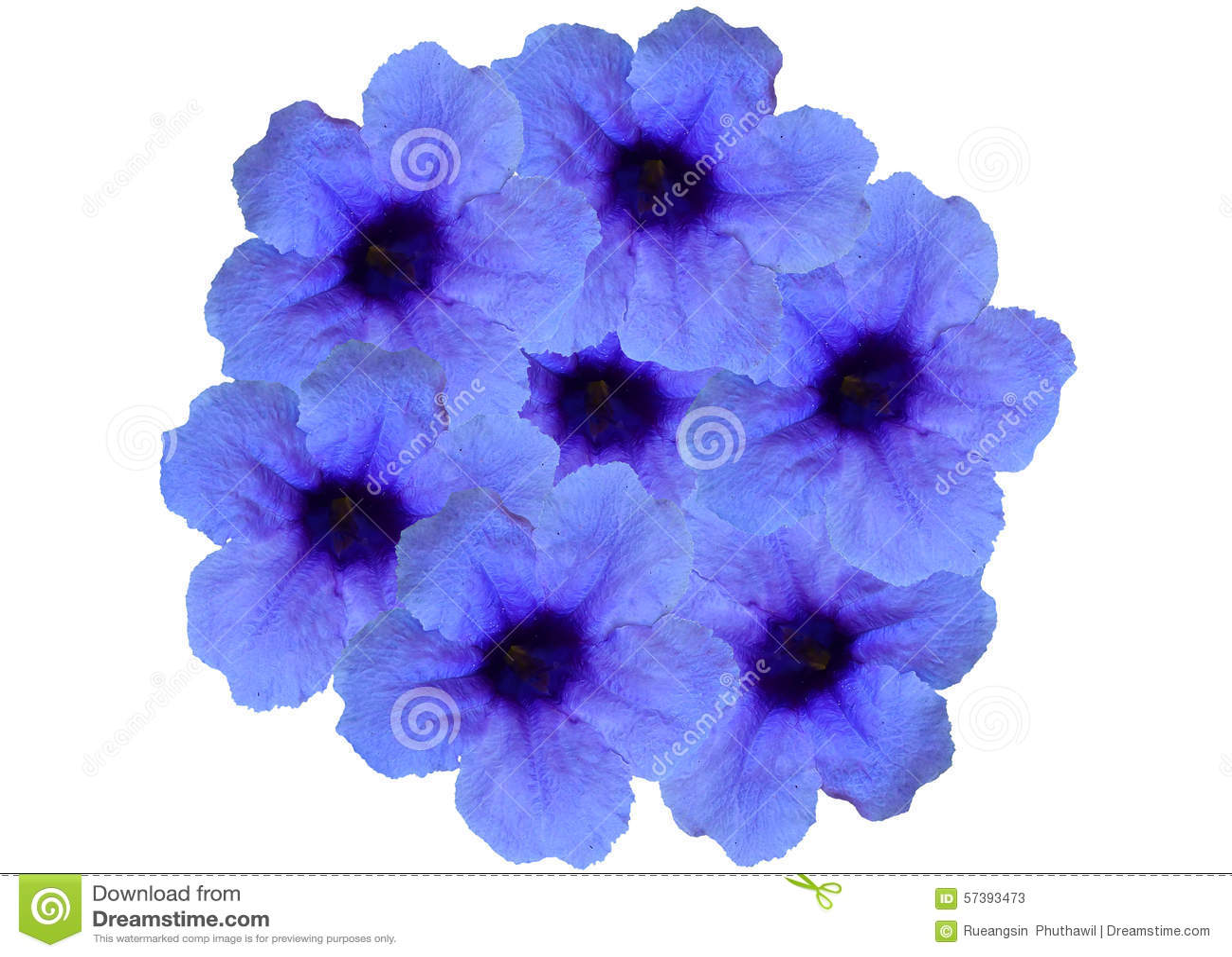 Purpere bloem