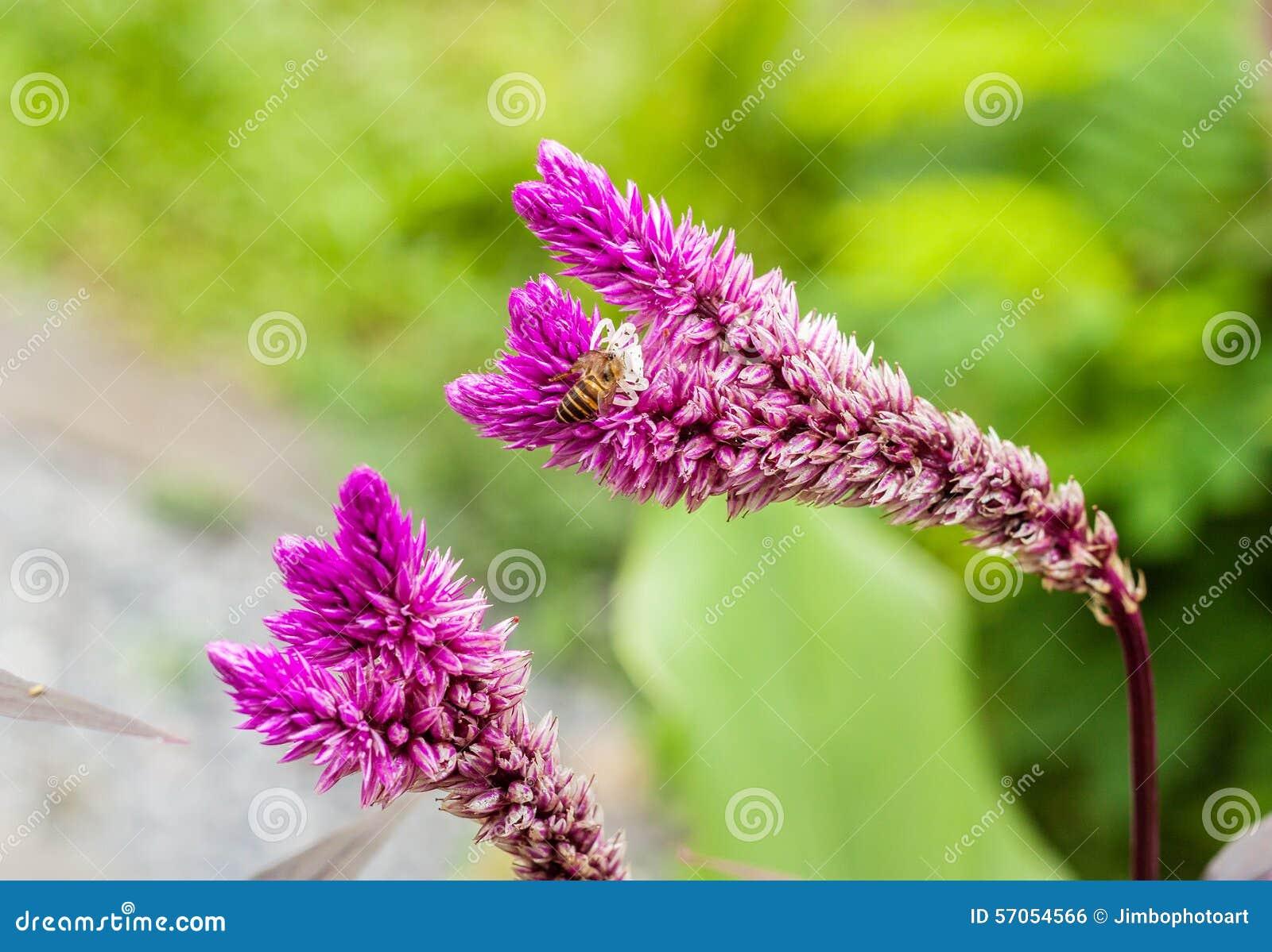 Purpere bloem met bij