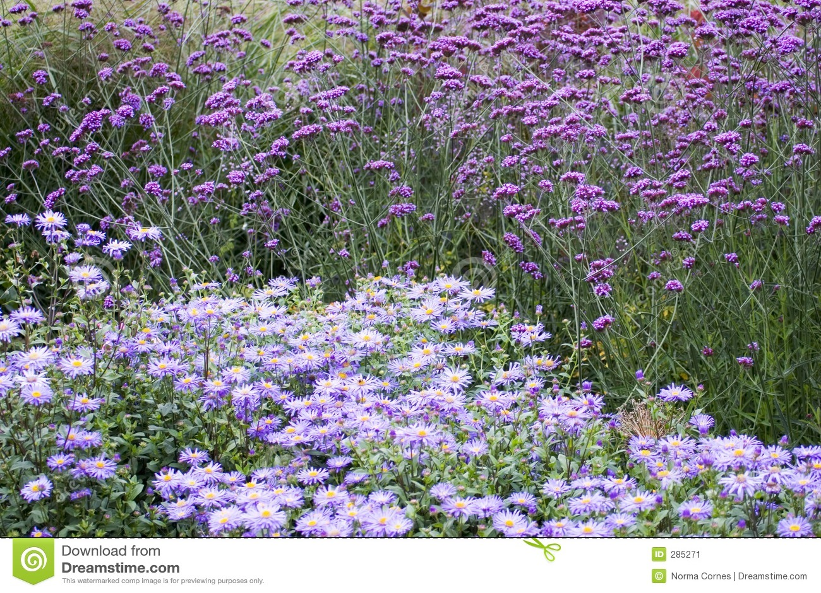 Purpere bloemen