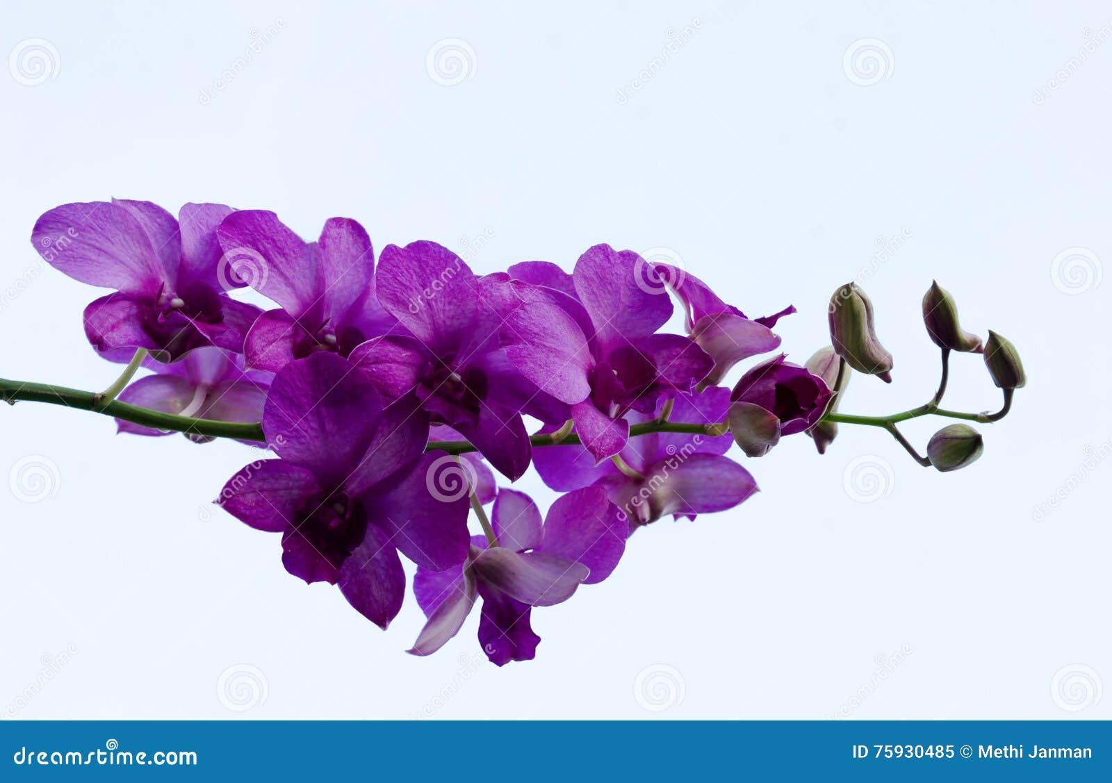 Purpere bloemen in de hemel