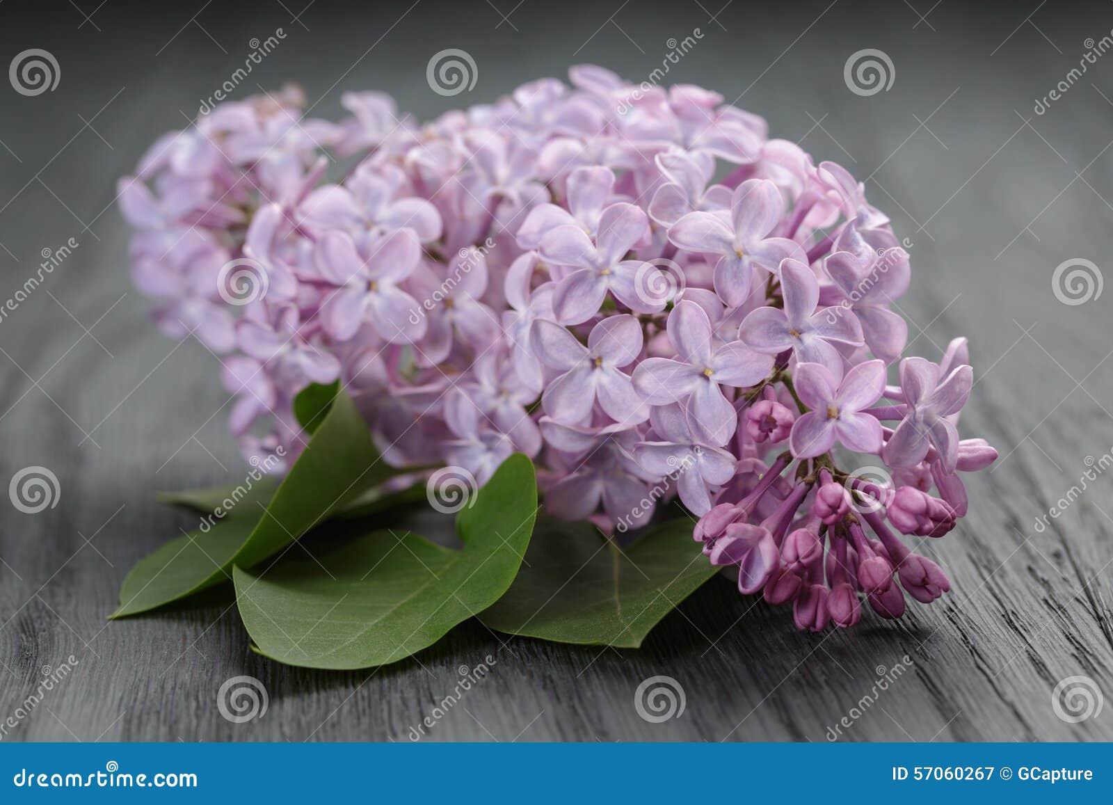 Purpere lilac bloem op oude eiken lijst