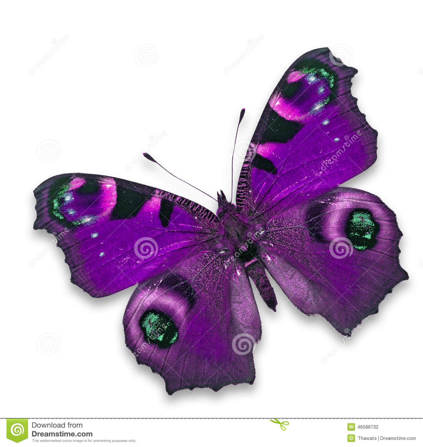 Purpere Vlinder