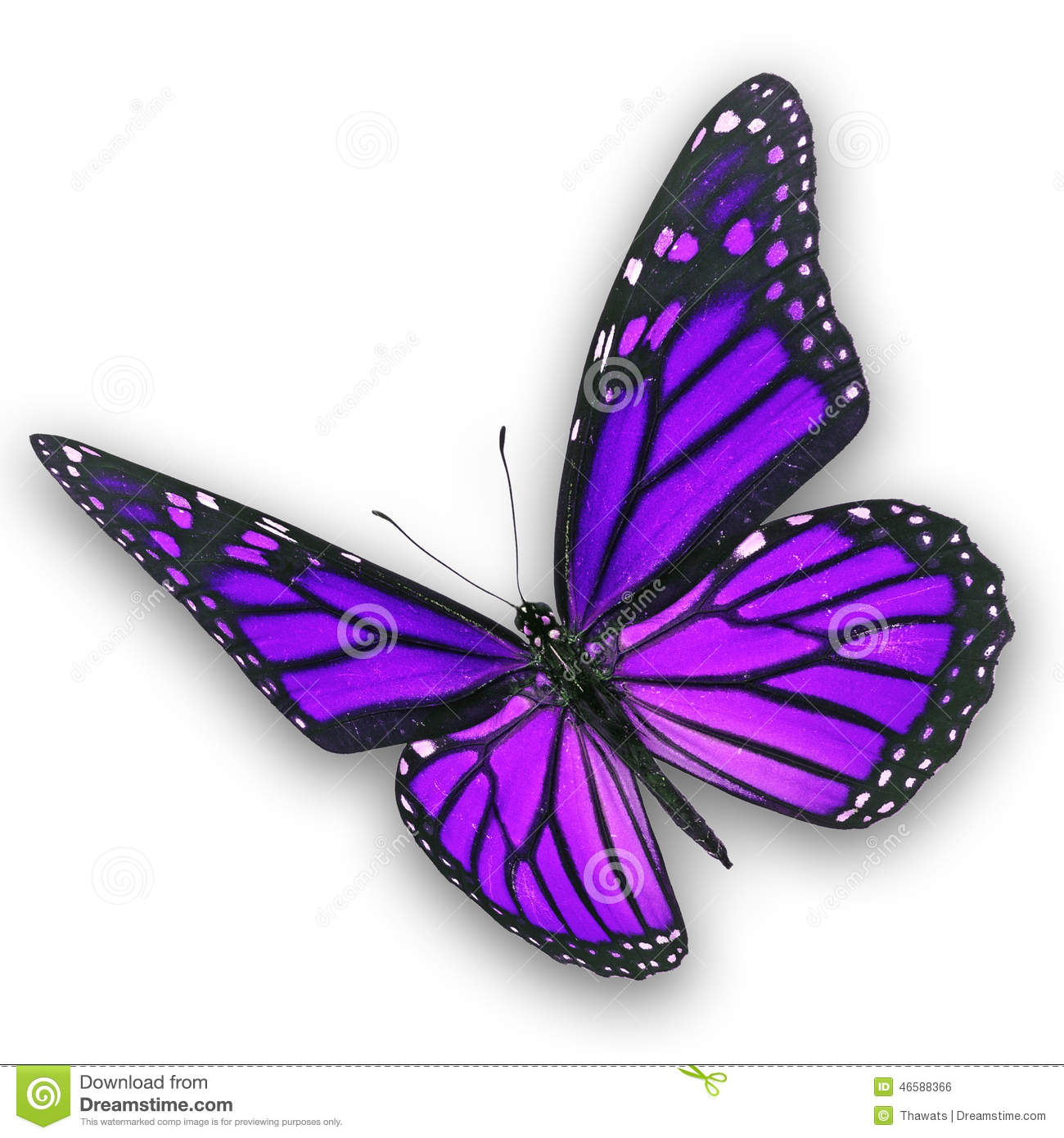 Purple butterfly flying stock photo. Image of colorful ...
