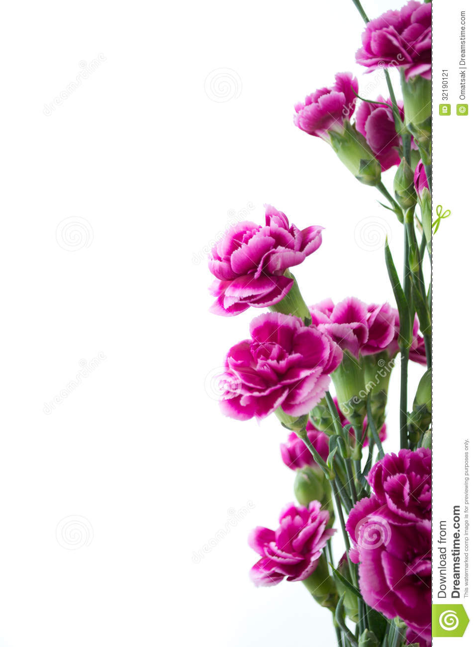 Purple Carnation Flowers Over White Background Stock Photo 32190121
