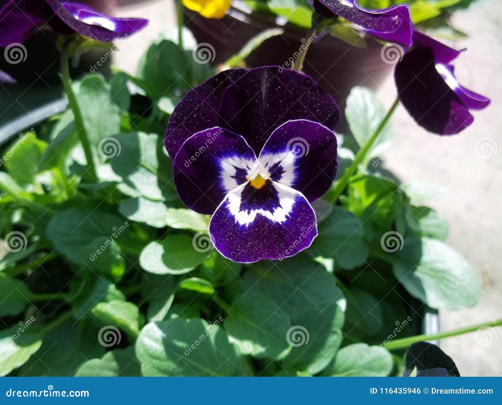 Purple Delight Flower Universe Stock Photo Image Of Delight