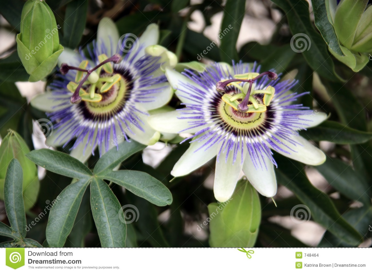 purple exotic flower stock images  image, Natural flower