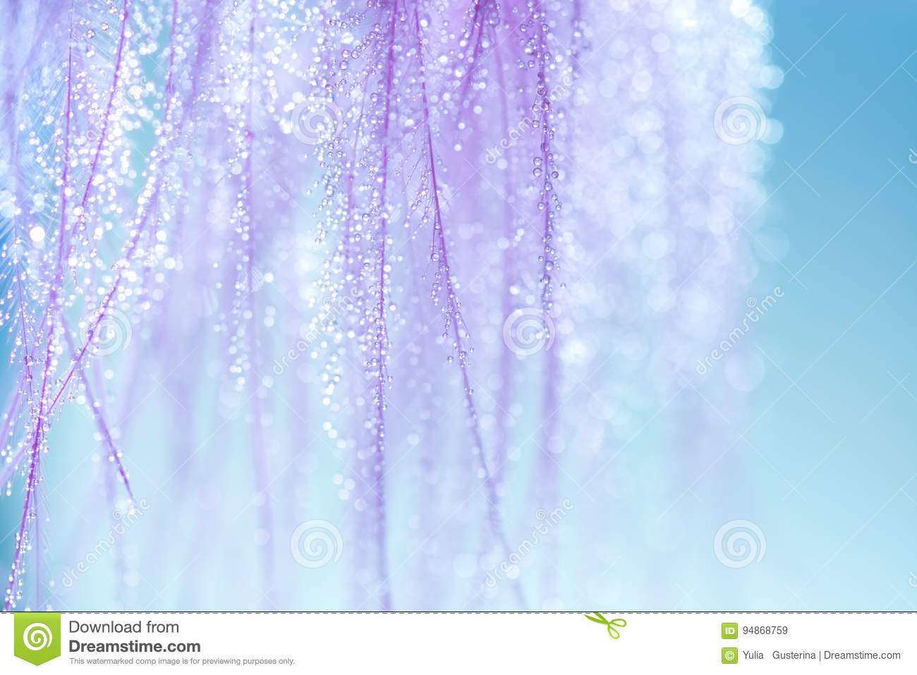 Purple feathers with small drops of water on a blue background. Very gentle and beautiful background of feathers. Macro