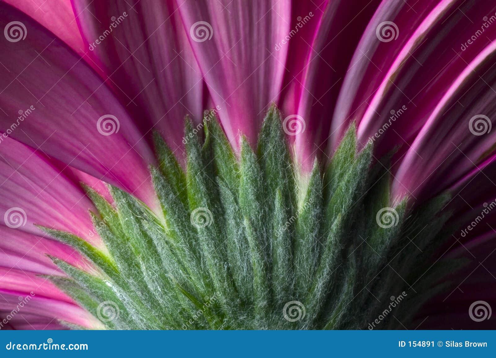 Purple flower 03