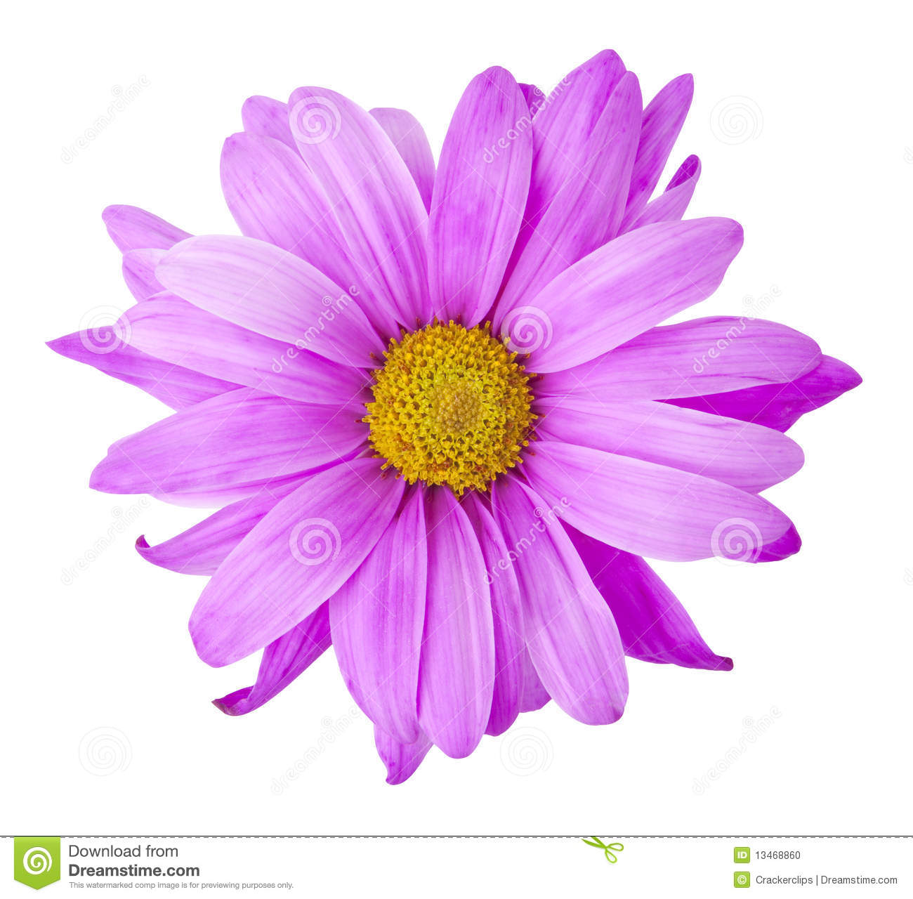Purple Flower Stock Photo Image Of Clipping Path Blooms