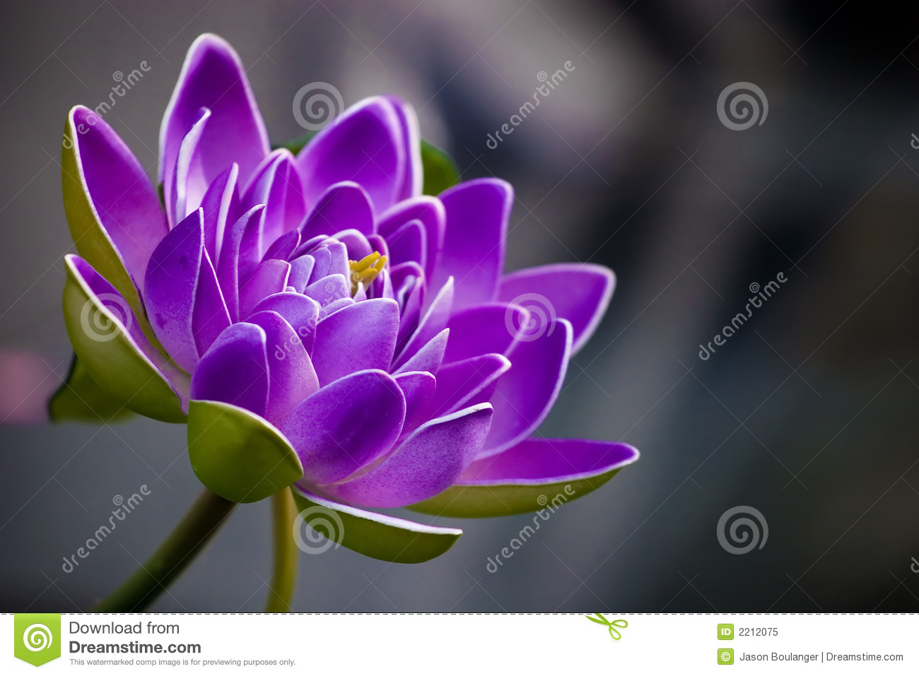 Flower Stock Images Download 3977206 Royalty Free Photos