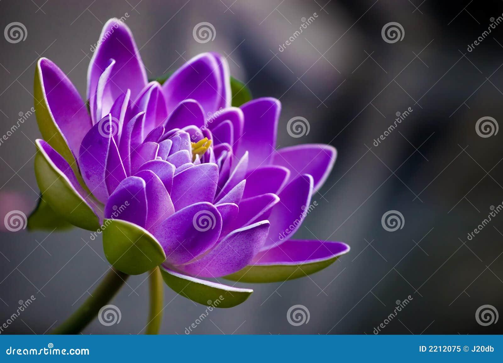 purple flower royalty free stock photo  image, Beautiful flower