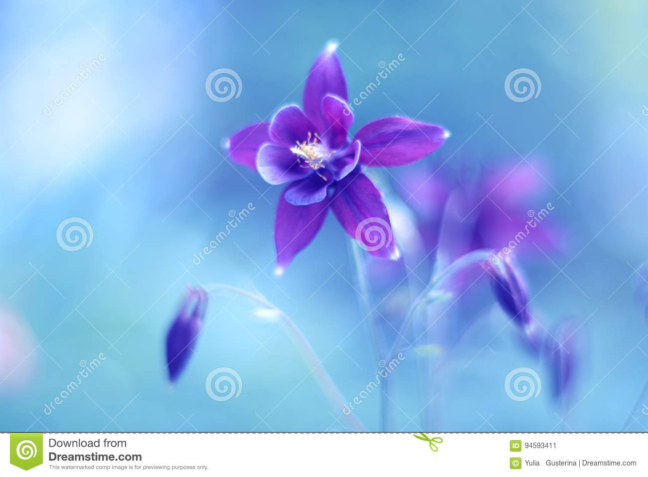 Purple flower aquilegia on a blue background beautiful flower with download comp izmirmasajfo