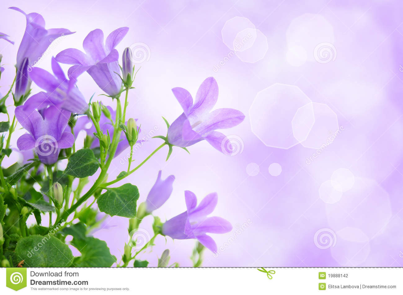 Purple Flower Background Stock Photo Image Of Foliage