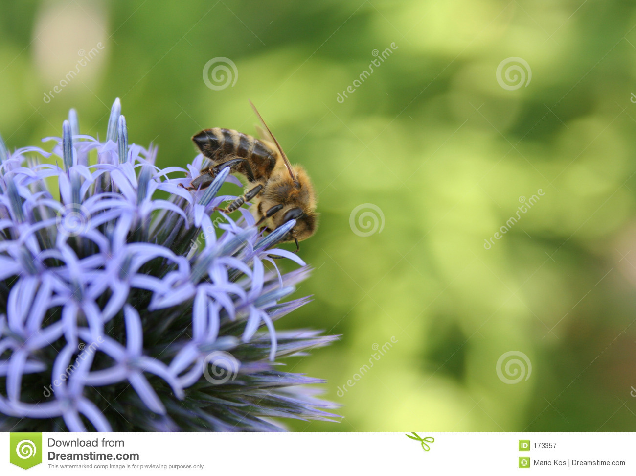 Purple flower with a bee