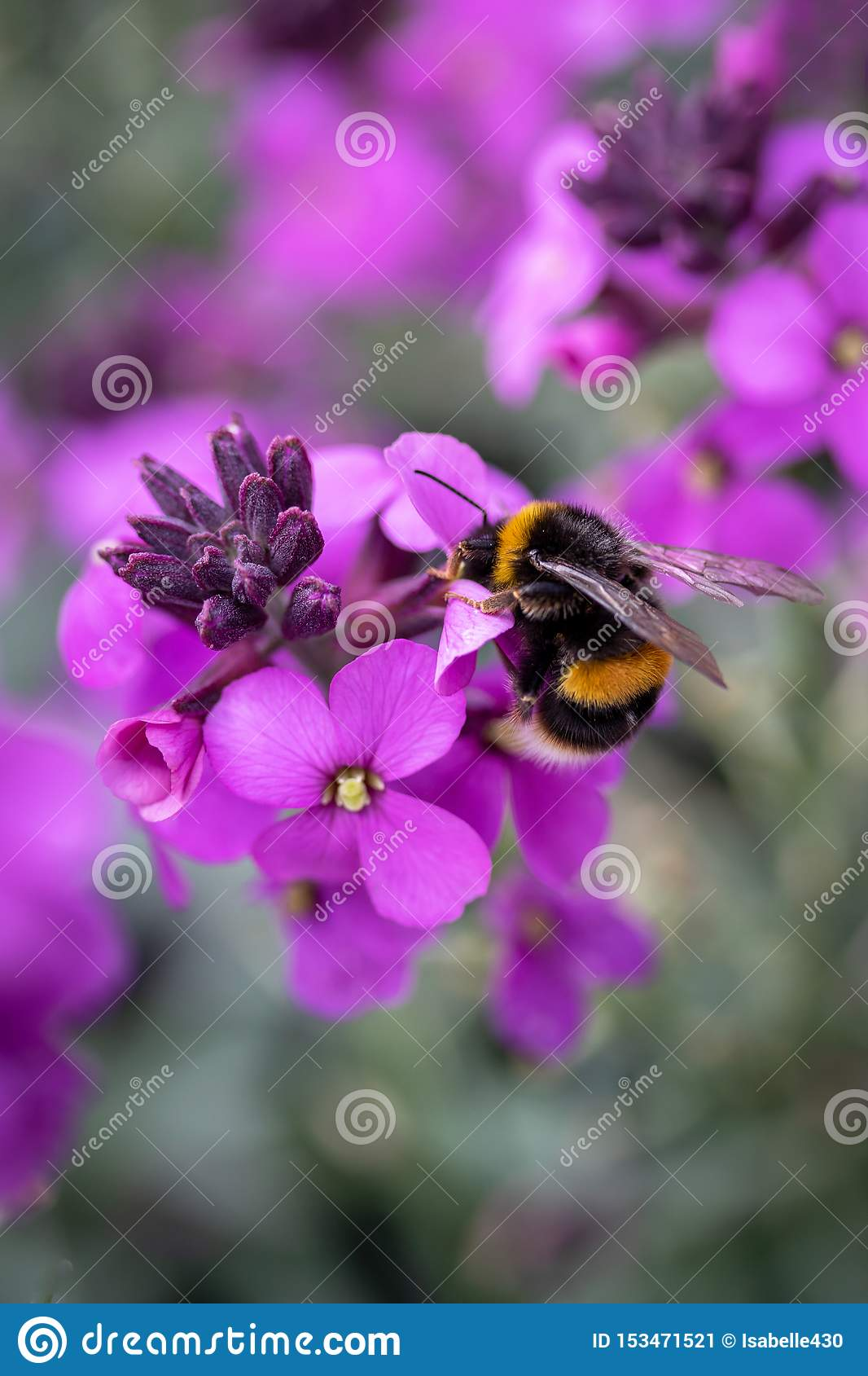Purple flower with bumble bee