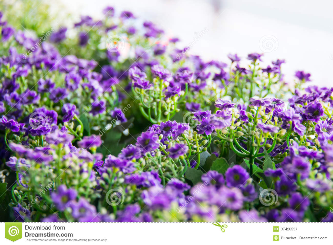 purple flower royalty free stock photography  image, Beautiful flower