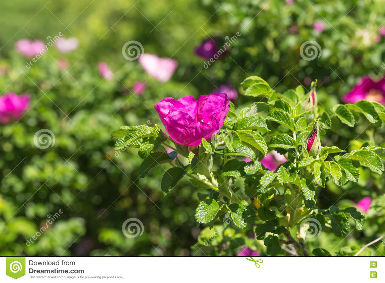 Shrubs with purple flowers at end of branch - Purple Flower In Green Shrubs