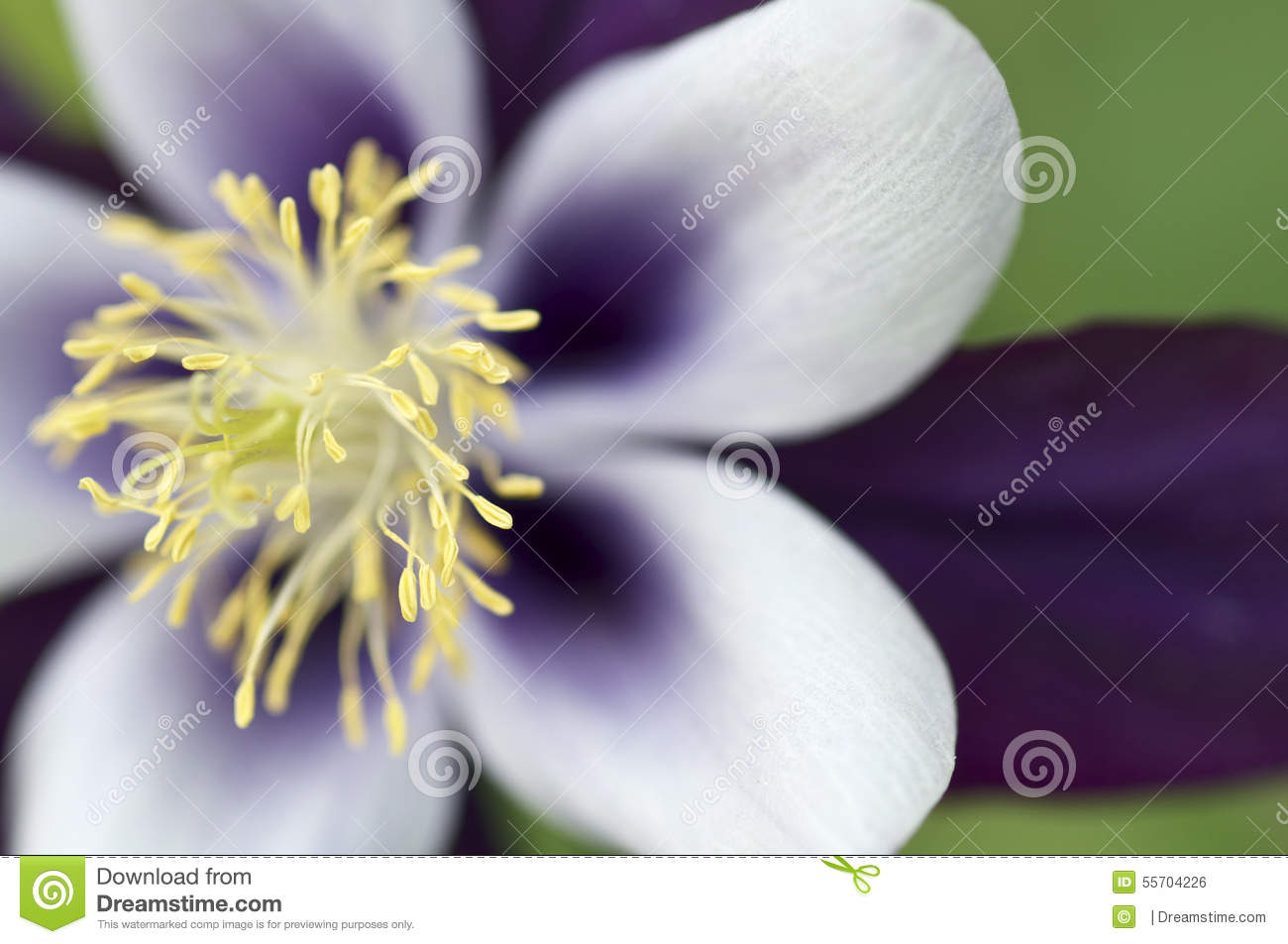 Purple flower with yellow stamen stock photo image of away blue purple flower with yellow stamen mightylinksfo