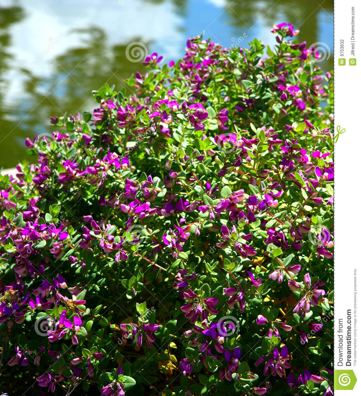 Excellent Purple Flowers Bush Od02 Roccommunity