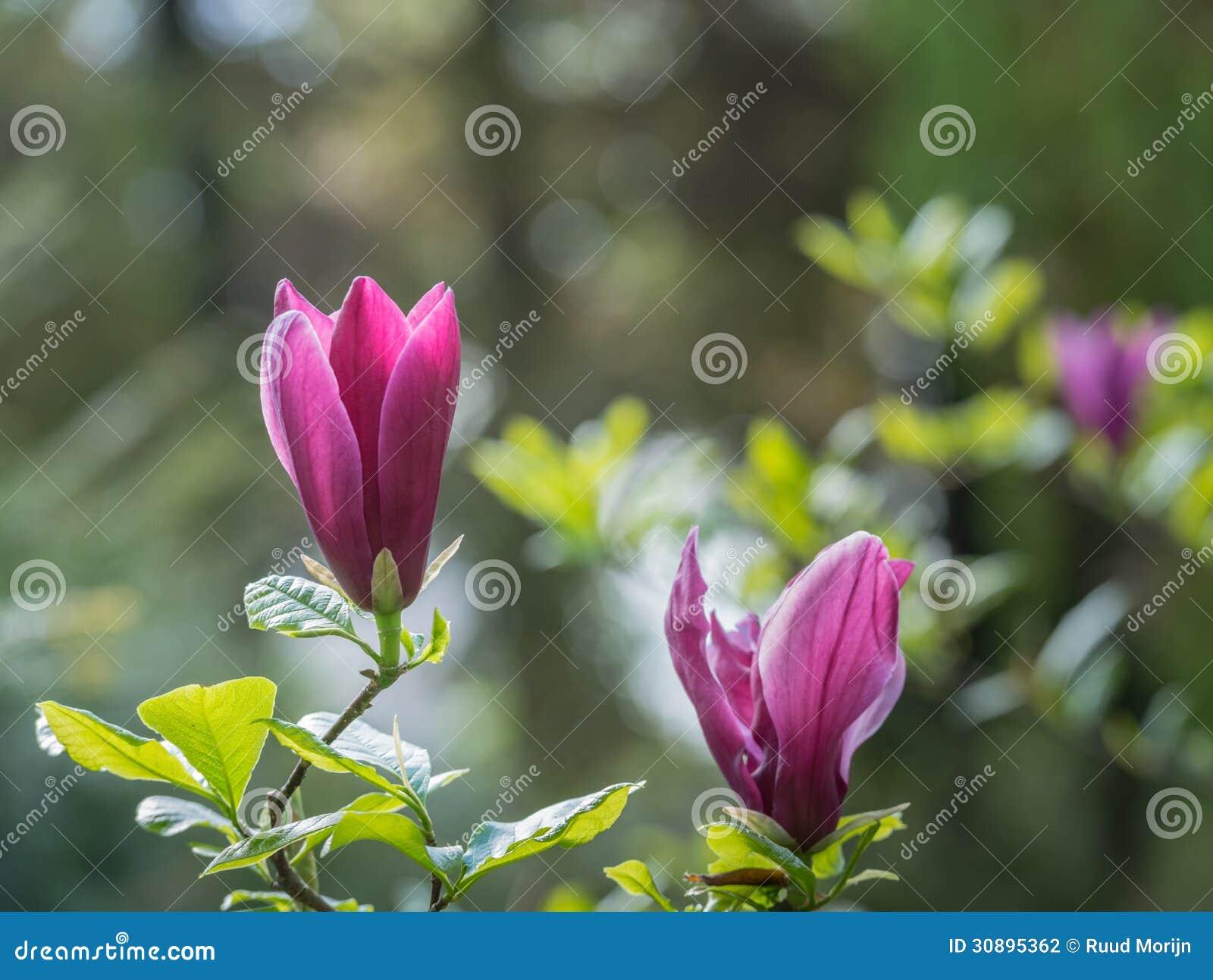Magnolia Natural Resources