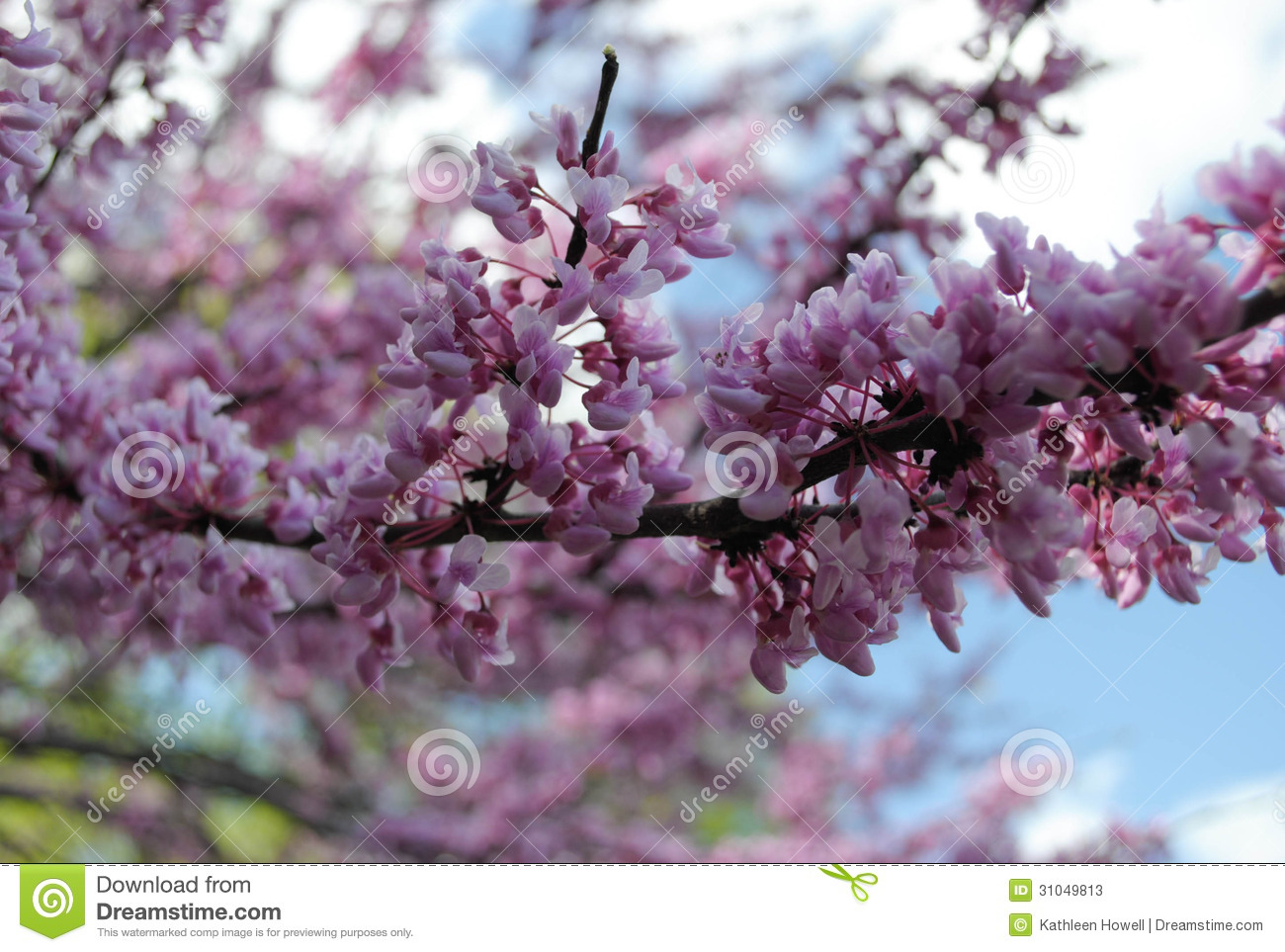 Purple Flowering Tree Stock s Image